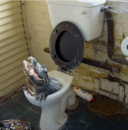 Файл:Alligator toilet.jpg